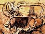 chauvet rhinos