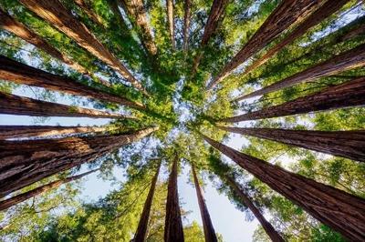 Trees 2 400px