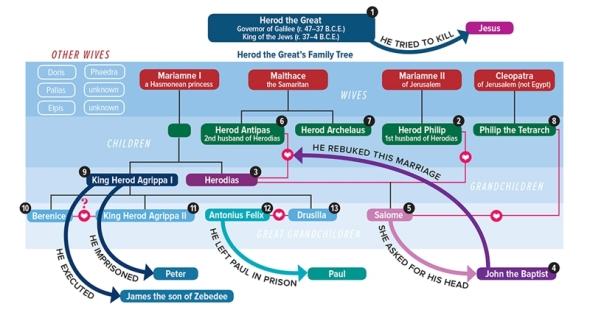 herodian-family-tree 800px