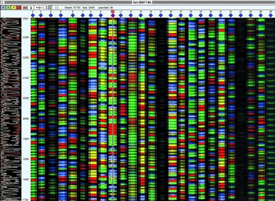 DNA sequencing has enabled the determnation of genomes