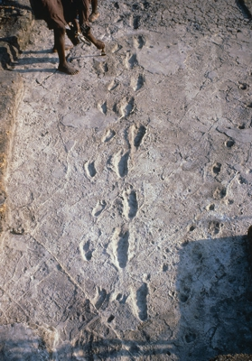 Laetoli footprints, discovered in 1976