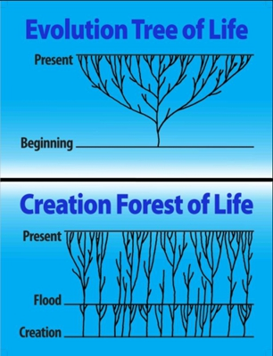 Bible: variation/speciation within basic kinds is like a forest