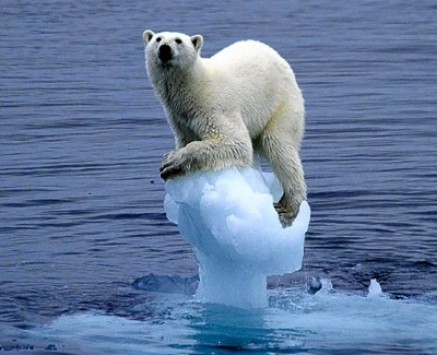 The polar bear has been used as a symbol of climate change by some activitists