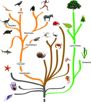 The hypothetical tree of life