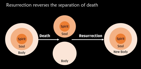Resurrection reverses the separation of death, but with a better body