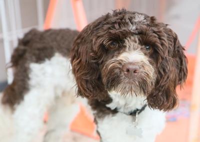 Milo, the dog